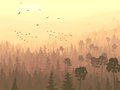 Vector panorama wild coniferous forest pines flock birds flying toward rising sun Stock Images