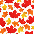 Vector pattern of autumn leaves. Red, orange, yellow maple leaf on a white background. Background for wrapping paper.