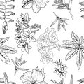Vector pattern of hand drawn exotic tropical flowers, leaves, jungle plants