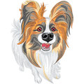 Vector pedigreed dog papillon breed cute smiling red and black with long shaggy ears Stock Photos