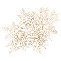 Vector peonies set of in vintage engraving style Royalty Free Stock Photo