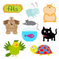 Vector pets illustration isolated Cute set White background Cat, dog, fish, hamster, parrot, turtle, rabbit Flat design Royalty Free Stock Photo