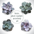 Vector-photo-realistic-succulents-set Royalty Free Stock Photo