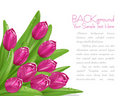 Vector pink tulips with drops of dew Royalty Free Stock Photo