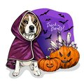 Vector portrait of Beagle dog wearing coat and pumpkins with crystal crown. Halloween illustration.Trick or treats. Hand