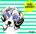 Vector portrait of beagle, with sunglassess. Hello summer. Hand drawn dog illustration.  on mint green strips. Royalty Free Stock Photo