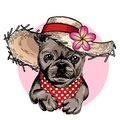 Vector portrait of French bulldog dog wearing straw hat, flower and polka dot bandana. Summer fashion illustration. Hand