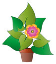 Vector potted plant with flower Royalty Free Stock Photo