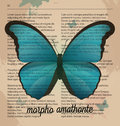 Vector Print Blue Butterfly Mo...