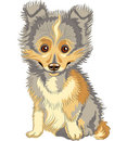 Vector Puppy Shetland Sheepdog, Sheltie smile Stock Photo