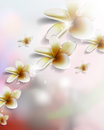 Vector realistic flower on blurred background Royalty Free Stock Photo