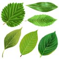 Vector realistic green leaves collection