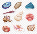 Vector realistic sea shells stickers sset on the transperant alpha background.