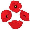 Vector Red Poppies. Poppy Vector Illustration.