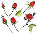 Vector red roses Stock Images
