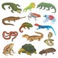 Vector reptile nature lizard animal wildlife wild chameleon, snake, turtle, crocodile illustration of reptilian
