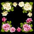 Vector rose corner isolated on black background pink and white flowers Stock Photography