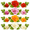 Vector rose horizontal vignette isolated on background red pink yellow and white flowers Stock Photo