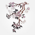 Vector sakura branch isolated illustration Royalty Free Stock Photo