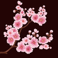 Vector sakura flower branch element. Elegant element for your design. Cherry blossom Royalty Free Stock Photo