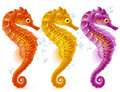 Vector sea horse Stock Images