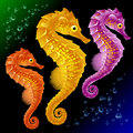 Vector Seahorses Stock Photo