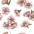 Vector seamless pattern with blooming almond