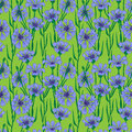 Vector seamless pattern blue cornflowers Stock Photos