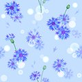 Vector seamless pattern with bluebottles blue gentle bluebottle flowers Royalty Free Stock Image