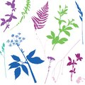 Vector seamless pattern with colour wild plants