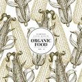Vector seamless pattern with corn on the cob with leaves. Vintage engraved illustration. Botanical banner template with