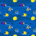 Vector seamless pattern with exotic colorful sea fishes inside. Royalty Free Stock Photo