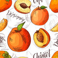 Vector seamless pattern with fruits. Apricot and peach and persimmon background. Hand drawn elements.