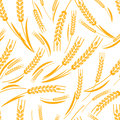 Vector seamless pattern with golden ripe ear of wheat. Royalty Free Stock Photo