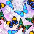 Vector seamless pattern, Hand drawn background with butterflies