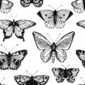 stock image of  Vector seamless pattern of hand drawn black and white butterflies