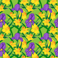 Vector seamless pattern iris narcissus Royalty Free Stock Image