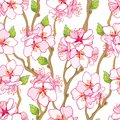 Vector seamless pattern with outline blooming Apricot flower bunch, branch and green leaves on the white background.