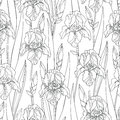 Vector seamless pattern with outline Iris flowers, bud and leaves in black on the white background. Ornate floral background