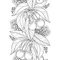 Vector seamless pattern with outline ripe Cherry, berry and leaf in black on the white background. Vertical border with cherry. Royalty Free Stock Photo