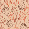 Vector seamless pattern of physalis doodle in Royalty Free Stock Photography