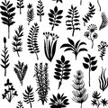 Vector seamless pattern with silhouettes of herbs and plants