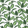 Vector seamless pattern of tropical plants on white background