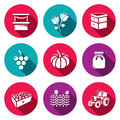 Vector Set of Agriculture Icons. Market, Roses, Beehive, Grapes, Pumpkins, Jam, Fruits, Wicker Fence, Tractor.