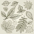 Vector set of autumn leafs illustration Stock Image