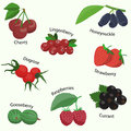 Vector set of berries