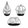Vector set with black and white cactuses and succulents in terrariums