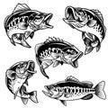 Set of black and white of largemouth bass fish Royalty Free Stock Photo