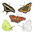 Vector set of butterflies colorful realistic isolated Stock Photography