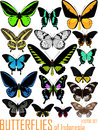 Vector set of butterflies of Indonesia isolated on white